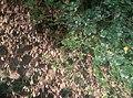 Where living at dead leaves meet.jpg