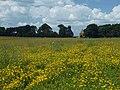 Wild flower meadow, Nostell - geograph.org.uk - 1353904.jpg