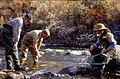 Wild trout project e walker river bridgeport0074 (26003011300).jpg