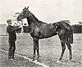 Winifreda (horse).jpg