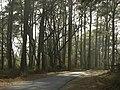 Woodland Loop - Flickr - pellaea.jpg