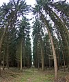 Worbis - Am Langenberg - panoramio - Renato Pietsch (16).jpg