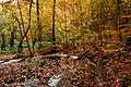 Yedigöller orman ve su.jpg