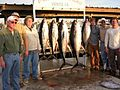 Yellowfin Tuna Fishing at Venice Louisiana.jpg