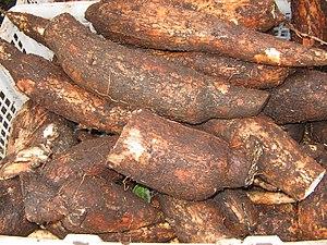 Nihamanchi - Manioc (Manihot esculenta) tubers