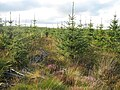 Young trees, Quarry Rig - geograph.org.uk - 548966.jpg