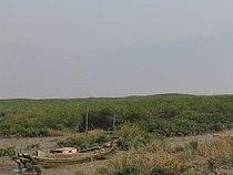 Yunxiao mangroves.jpg