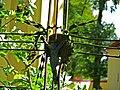 Zespół kościoła p.w. Wniebowzięcia NMP - cmentarz przykościelny (fot.3) - Bystrzyca, gmina Wólka, powiat lubelski, woj. lubelskie ArPiCh A-563.JPG
