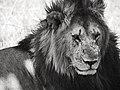 """""""Calm"""" @ Masai Mara (21373245543).jpg"""