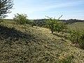 Äußere Heide nordöstlich von Schrick sl6.jpg