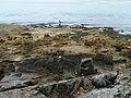 Île de Berder-Pêcheur (2).jpg