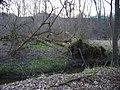 Údolí Pitkovického potoka, vývrat.jpg