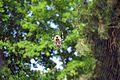 Αράχνη - panoramio (1).jpg