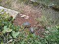 Κτήμα Μερκούρη - panoramio (1).jpg