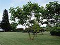АЛБЕНА (ALBENA) - panoramio (29).jpg