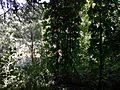 Джунгли - panoramio (4).jpg