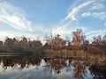 Заплавне озеро. Захід сонця. ВБУ Дніпровсько-Орільська заплава.jpg