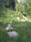 Камінські піщаники.JPG