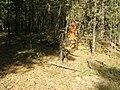 Ленточный бор в пригороде Барнаула. Сентябрь 2009 г..JPG