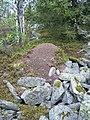 Муравейник на склоне Мартая - panoramio.jpg