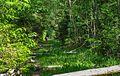 Оленёнок в лесу.jpg
