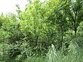Парк шума Гази Баба во мај (97).JPG