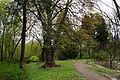 Сирецький дендрологічний парк 09.jpg