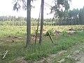 Этому лесу по-новому надо вырасти 80 лет. - panoramio.jpg