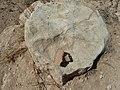 שריד ארכיאולגי בחורבת ענים ביער יתיר.JPG