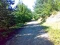 مسیر خوشکل پوشیده از درخت - panoramio.jpg