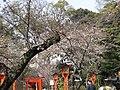 平野神社 - panoramio.jpg