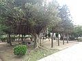 桃園觀音白沙岬燈塔 50 (14979355099).jpg