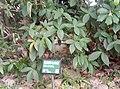 植物園中的植物及樹木花草(包括歷史遺跡)-43.jpg