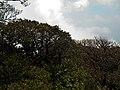 爬元宝山最高点收揽一路风光-桂穿越 - panoramio (118).jpg