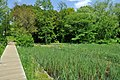 矢川緑地 - panoramio (9).jpg