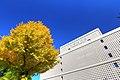 科学技術館とイチョウ - panoramio.jpg