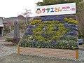 花見山公園 サザエさん福島編オープニング放送中! 2013 (8670876985).jpg