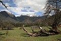 草原,原始森林,雪山 - panoramio.jpg