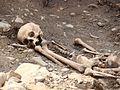 00324 Die Skelette in Sanok in einem Marktplatz.JPG