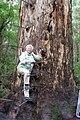 00 4501 Australien - Gloucester-Nationalpark.jpg