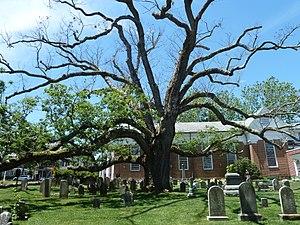 "Presbyterian Church in Basking Ridge - 600 year-old ""Holy Oak"", June 2016"