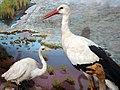 046-Mozeh Tarikh Tabiei موزه تاریخ طبیعی محیط زیست قم.jpg
