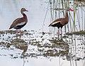 06-22-15-9847.jpg - Flickr - Verde River.jpg
