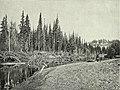 075 Виды Тайги Тайга по берегам реки Кемчуга (cropped).jpg