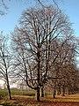 108 Lindenallee Ladendorf Winter II.jpg