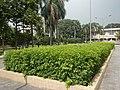 120Mehan Garden Ermita Manila 05.jpg