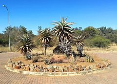 1 National Botanical Gardens Botswana.jpg