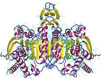 Isocitrate dehydrogenase - Image: 1t 0l