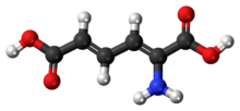Ball-and-stick model of 2-aminomuconic acid