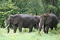 20090507-TZ-NGO Safari 339 (4678021660).jpg